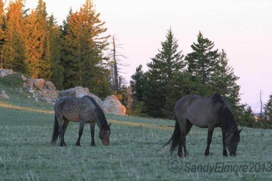 Custer and Winnemucca