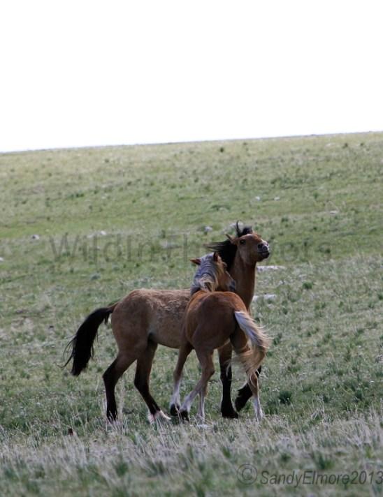 Missoula and Lobo