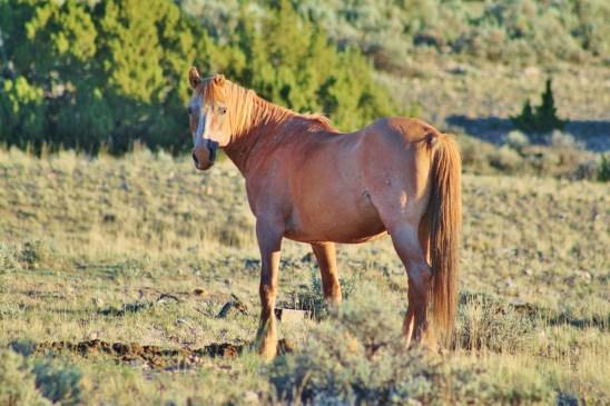 Durango, June 24, 2013  Photo by Linda Dombeck.