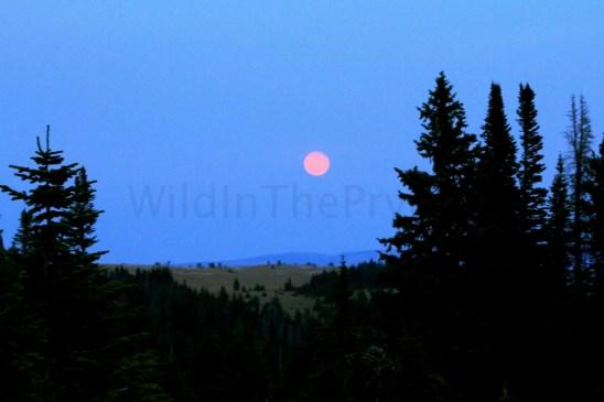 Full Moon, August 21, 2013