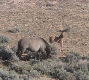 Bakken and her new foal.  Photo by NPS (Thank you Cass!)