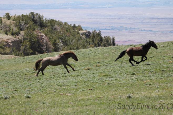 Coronado chasing Santa Fe