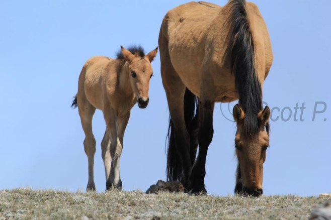 Hataalii and Foal, May 4, 2014