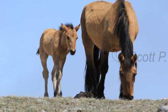 Hataalii and Foal, May 4, 2014