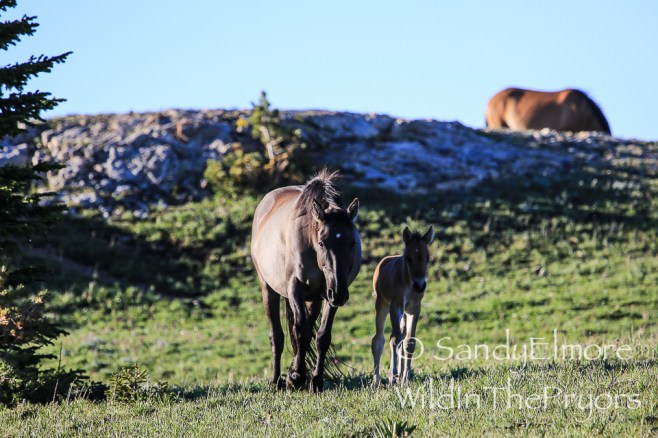 Gracianna and foal