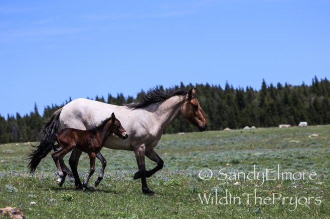 Maia and her colt, June 22, 2014