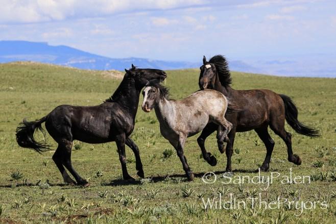 Bachelor Stallions playing, July, 2014
