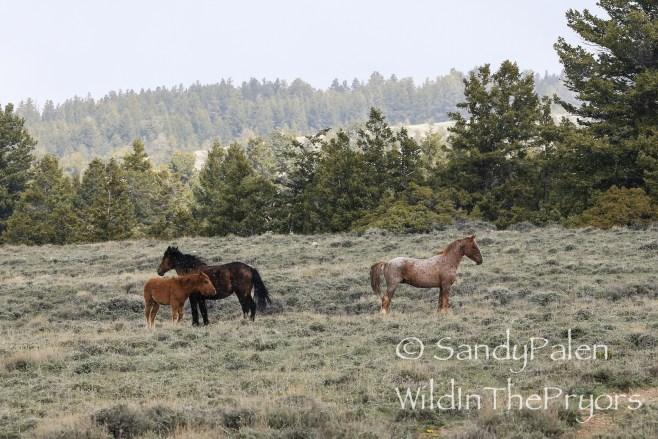 Tecumseh, Galadrial and Oceana, May 10, 2015