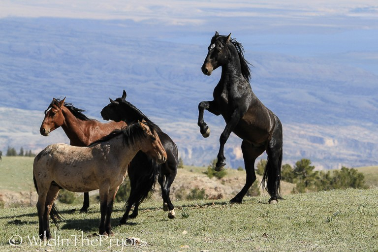 Pryor Mountains – Wild in the Pryors