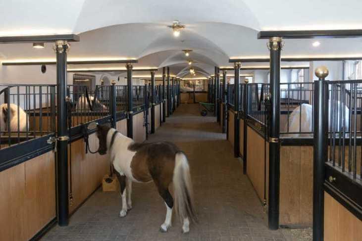 Videoüberwachung im Pferdestall