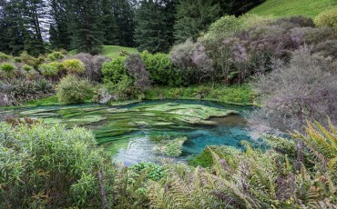 Blue Spring and the Te Waihou Walkway near Matamata. Putaruru, North Island, New Zealand.