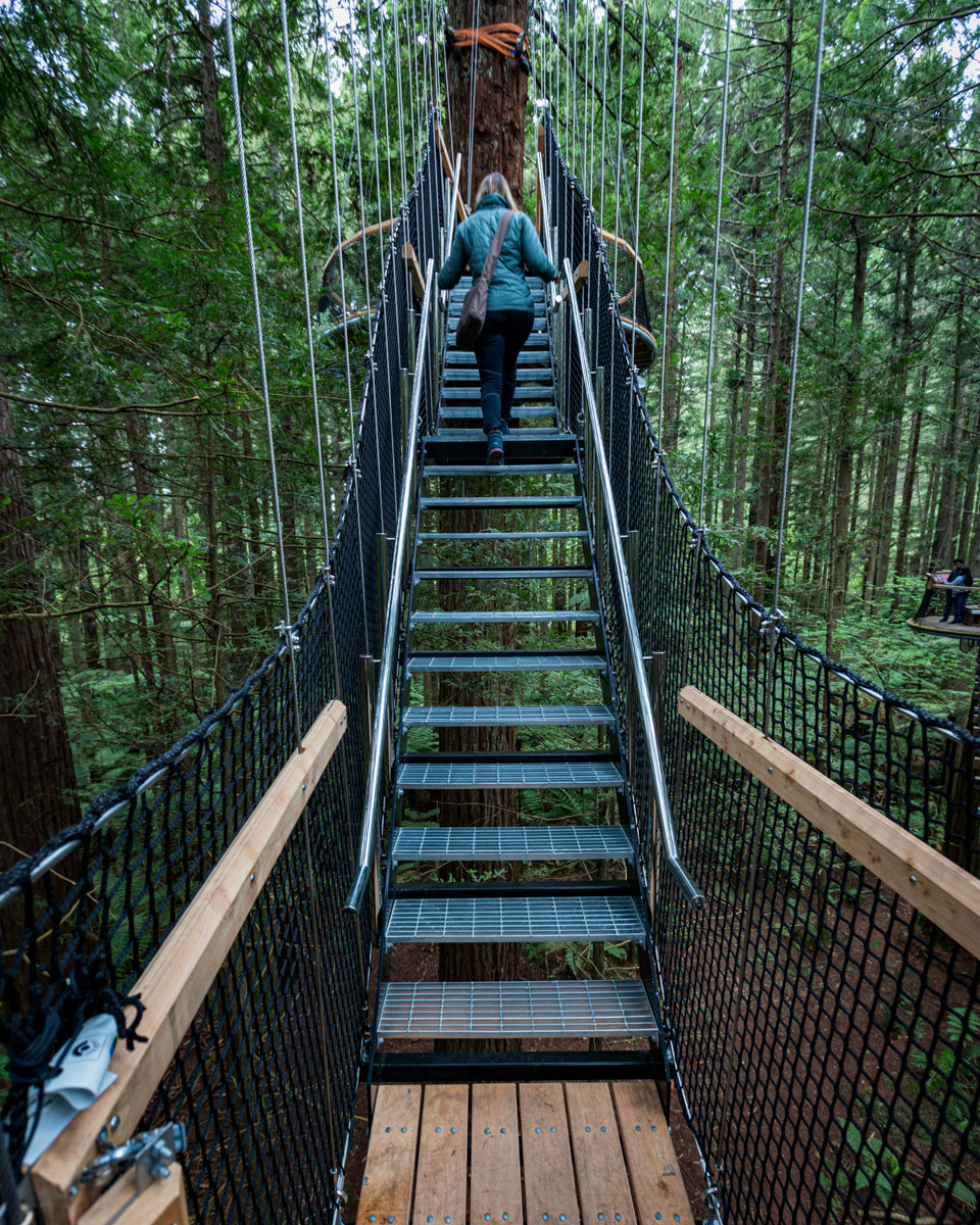 The Redwood Treewalk near Rotorua  on the North Island of New Zealand.