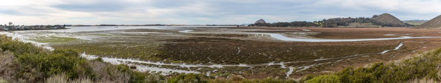 The Morro Bay Estuary and Elfin Forest.