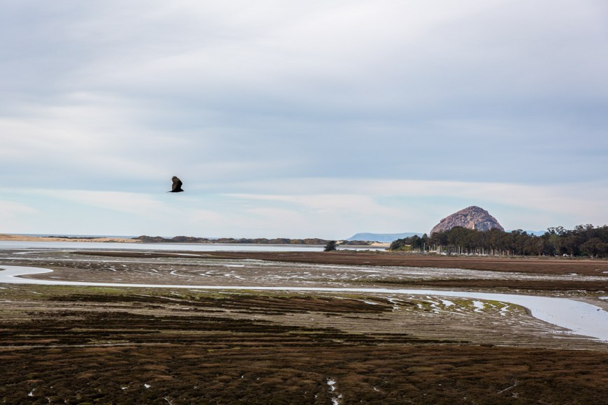 The Morro Bay Estuary