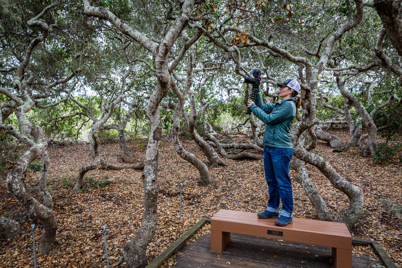 The Elfin Forest in Morro Bay