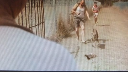 Possum wrapped in uncomfortable mesh type material being dragged along the ground with actors and Greyhound chasing it in the Short film 'Maiden'
