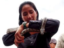 Southern African python. Non-venomous.