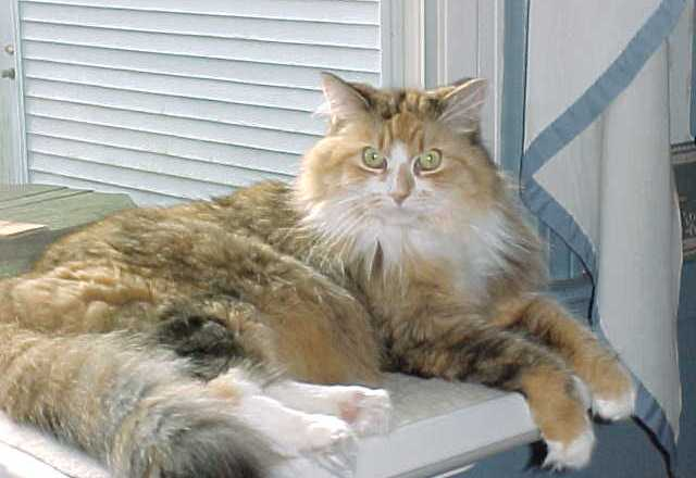Foot-long worms infecting cats in the United States