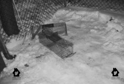 Squirrel traps molested by a person in an attempt to release a trapped animal.