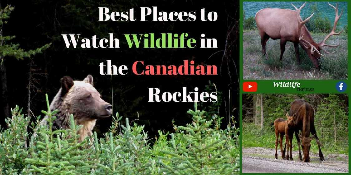 Best places to watch wildlife in the canadian rockies