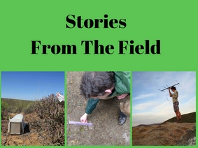 Wildlife Impulse-stories from the field