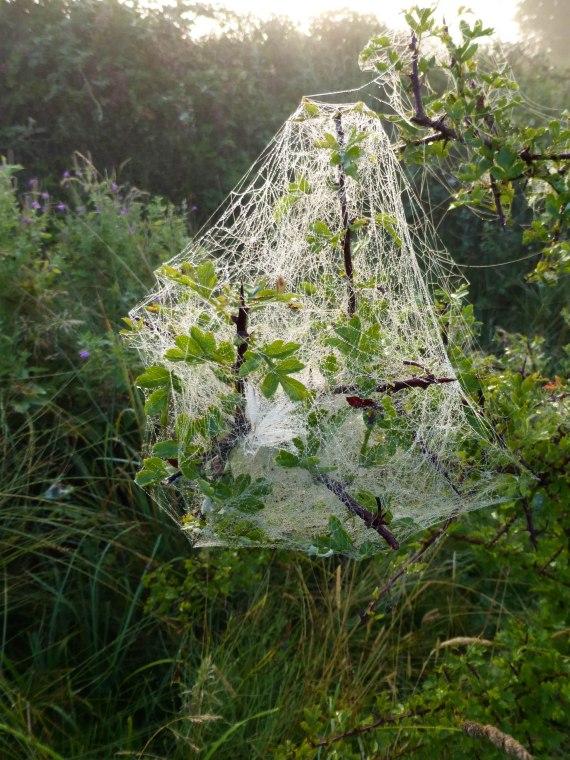 Spiders&Webs_-1000266