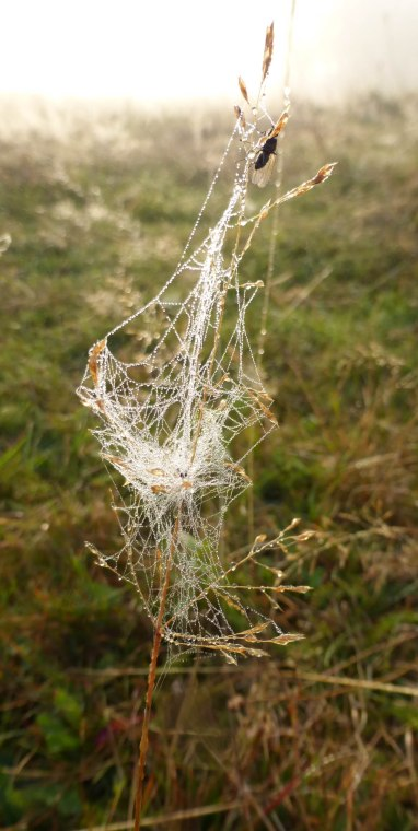 Spiders&Webs_-1000269