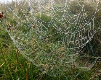 Spiders&Webs_-1000272