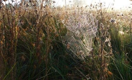 Spiders&Webs_-1000288