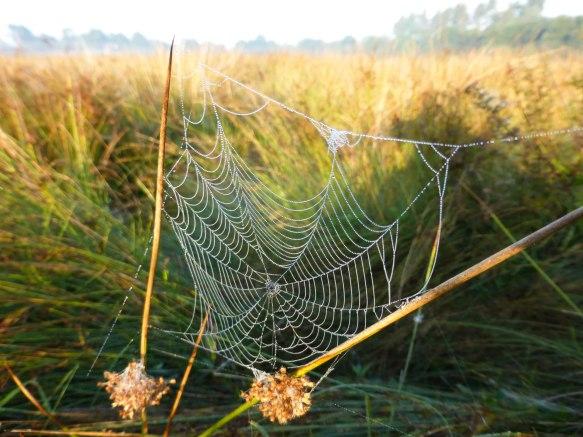 Spiders&Webs_-1000293