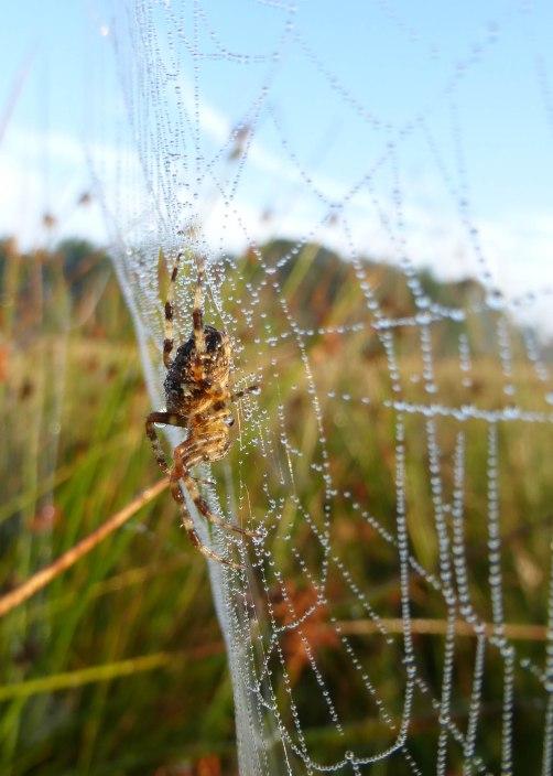 Spiders&Webs_-1000302
