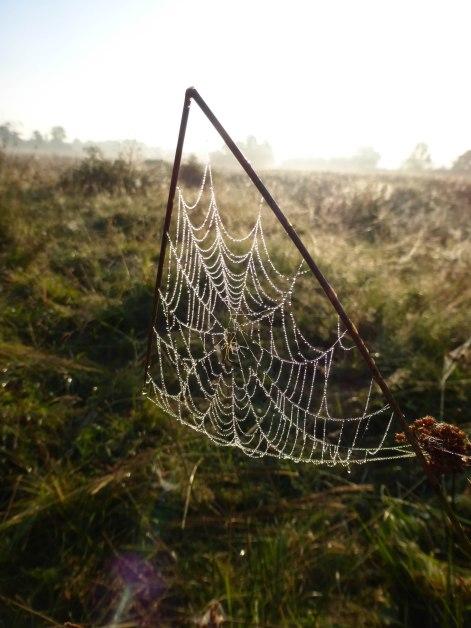 Spiders&Webs_-1000314