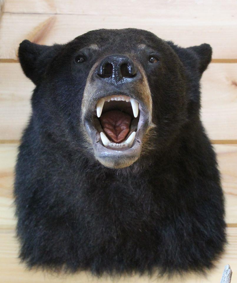 Bear Shoulder Mount