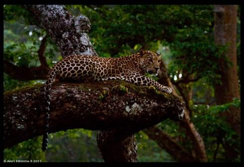 leopard_5973585618_o