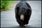 sloth-bear_7649643134_o