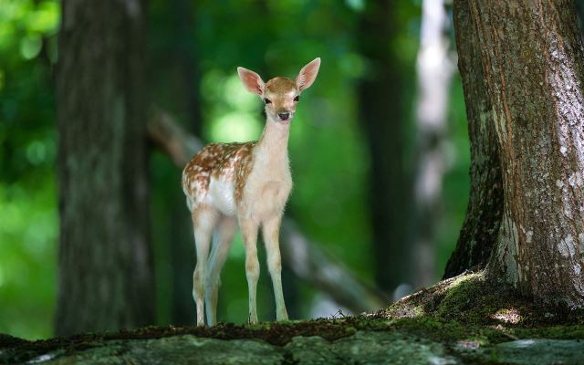 Wildlife-Deer-photos