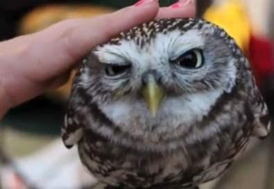 lovely-owl