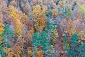 Mixed forest at Estrela Mountain
