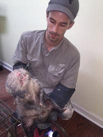 Bird, Snake, Raccoon, Skunk & pest critter removal of Franklin, Brentwood, Spring Hill TN