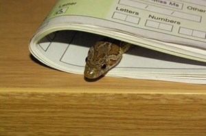 how to find a lost snake in the house