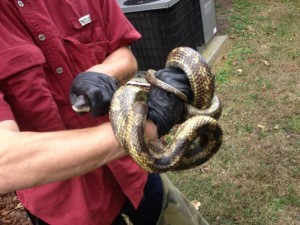 Snake Removal & Serpent Control Franklin, Brentwood TN, Bellevue, Green Hills