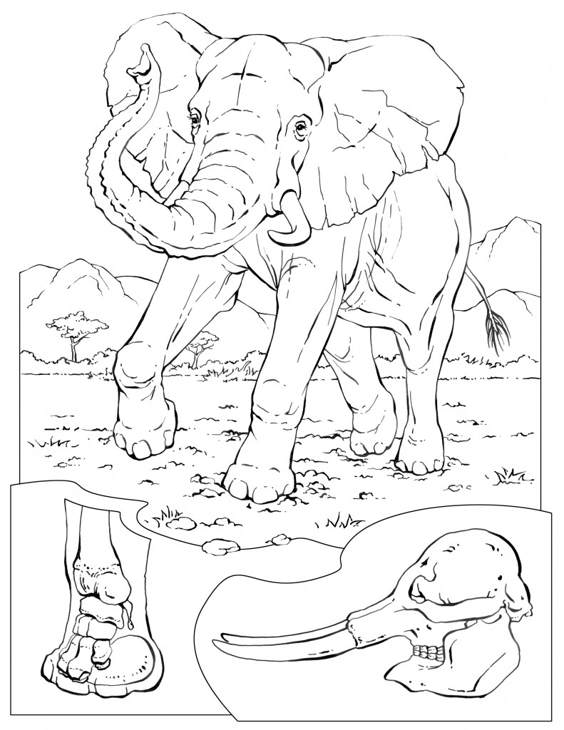 Coloring Pages – Wildlife Research & Conservation | colouring pages printable animals