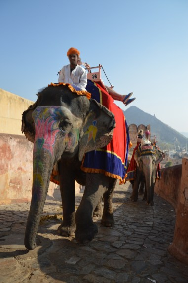 Wildlife_Revolution_elephants_amber_fort5