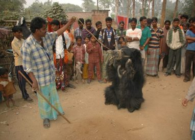 Dancing-bear-project-3-e1584444107973 Guest Post: The Elephants of India's Wildlife SOS India