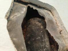 rodent-removal-bradenton