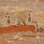 14 Most Interesting Animals in Namibia