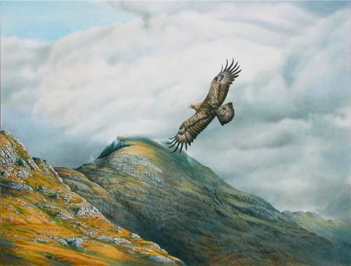 Knoydart Golden Eagle of Ladhar Bheinn the highest munro