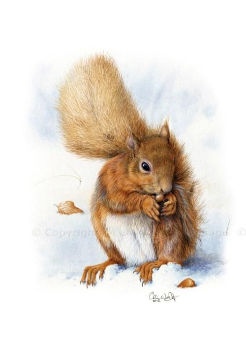 Red Squirrel by Scotland Artist Colin Woolf