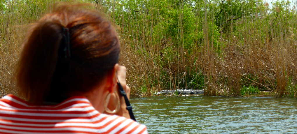 Delta Wildlife Boat Eco Tour