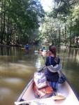 Exploring the Bartram Canoe Trail - Champion Cypress